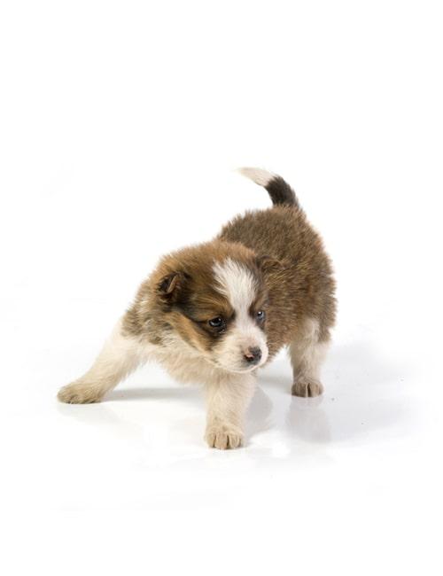 Собаки младше 3 лет