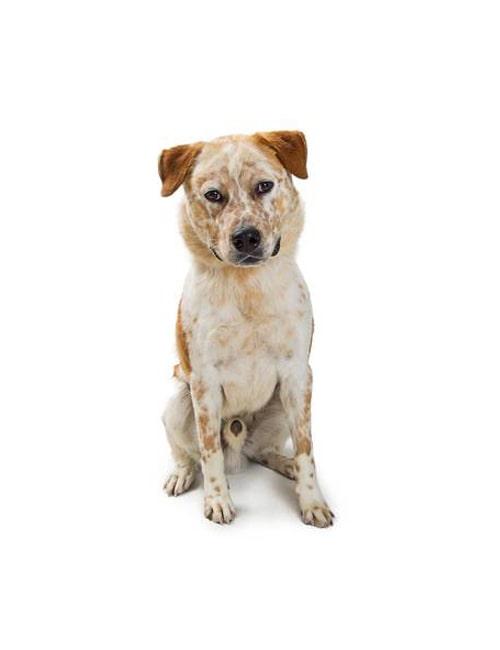 Собаки страше 3 лет